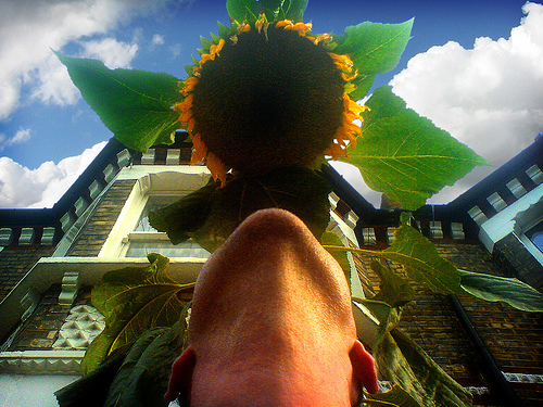 Self Portrait with Sunflower by Mr Jaded.