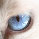 The Amazing World of Cat's Eye Macro Photography
