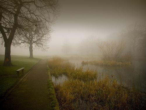 A bleak Duck Pond