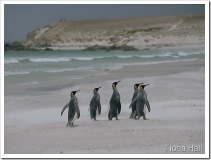 Penguins on the Beach in Antarctica