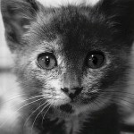 25 Adorable Animal Photos