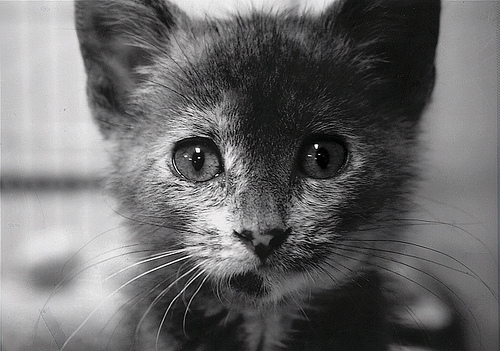 adopt meh?