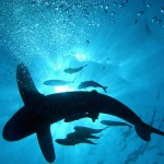 25 Unconventional Animal Shots