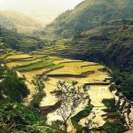 The Stunning Rice Terraces of Asia: 22 Incredible Landscapes