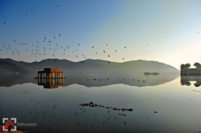 India landscape flock of birds copyright Aloha Lavina