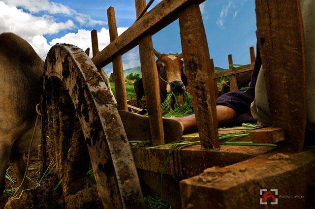 Burmese man asleep at midday after World Cup on TV copyright Aloha Lavina