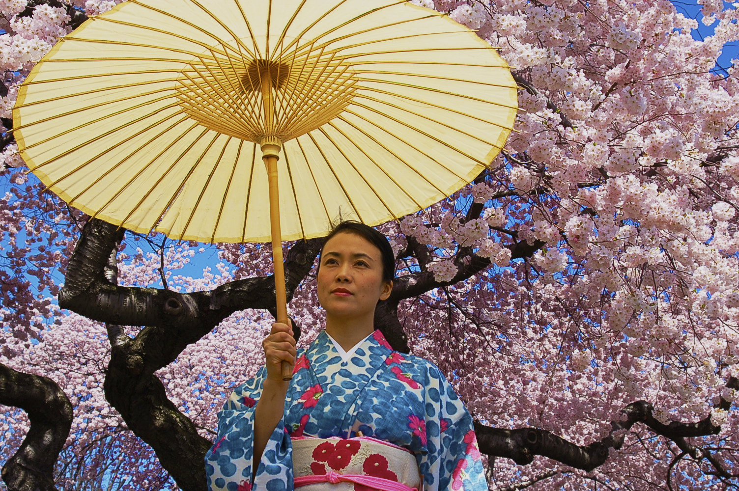 In this photograph, the cherry blossoms reveals something about the portrait subject's Japanese culture.- Chase Guttman