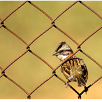 Beauty from the Commonplace: 27 Cool Photographs of Sparrows