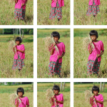 Rice field girl series
