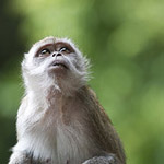 Monkey Business: How to Photograph Monkeys