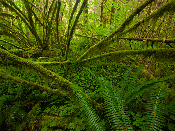 """Olympic Rain Forest"" by Ian Plant"