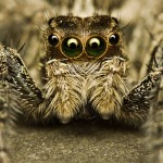 31 Photographs of Spiders That Will Make Your Skin Crawl
