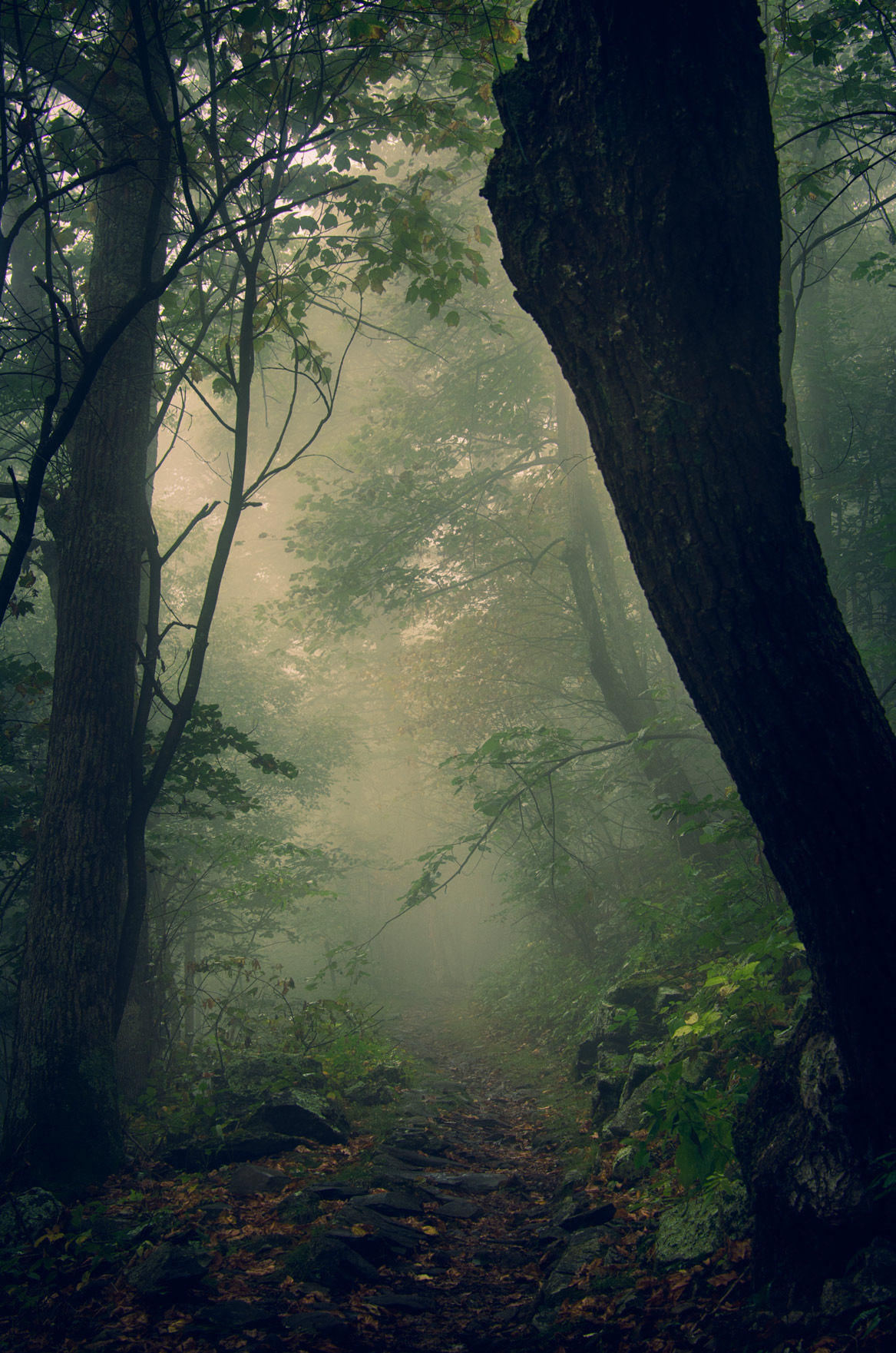 This is the image I selected to use as a background. I liked how the fog gave it extra creepy factor.