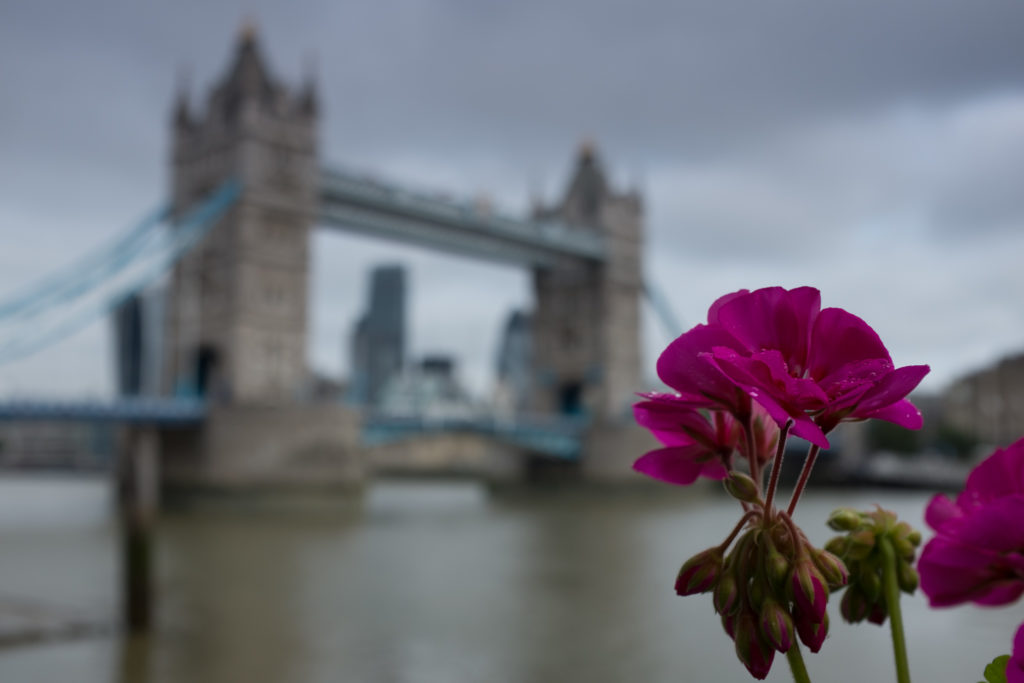 Defocussed shot of Tower Bridge framed by a flower