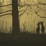 The Secrets of Effective Silhouette Photography