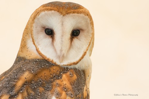 Heart-shaped Face ©Sheen's Nature Photography