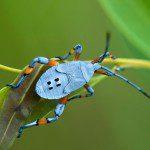 bug stalking 15 7