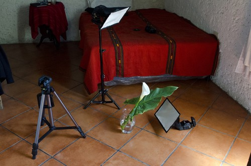 """Behind the scenes of """"Calla Lily Bursts."""" Photo by Rebekah Nemethy"""