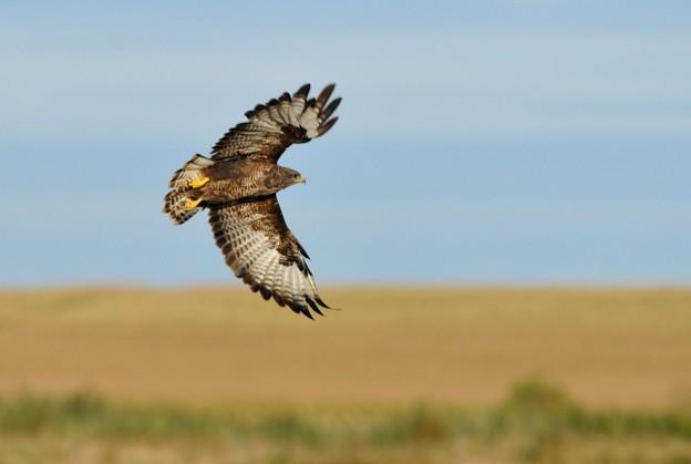 birds of prey 12 9