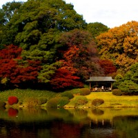 7 Elements that Make Japanese Gardens a Photographer's Paradise