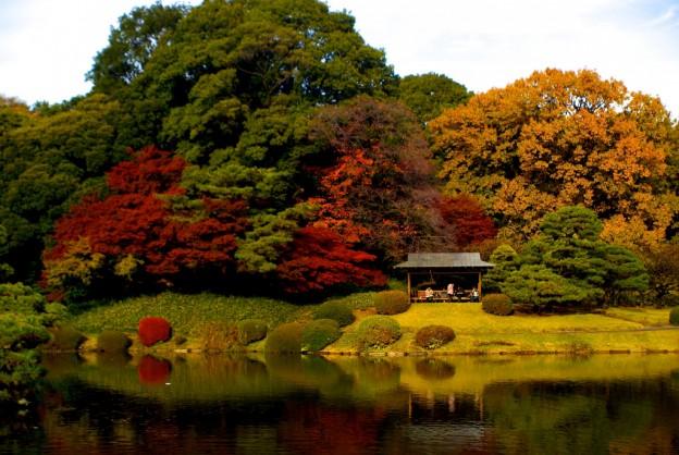japanese gardens 21 9