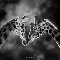 The Majestic Wildlife Photography of Marina Cano is Inspiring