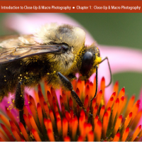 Close-Up & Macro Photography eBook Review