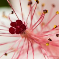 Extension Tubes: An Affordable Intro to Macro Photography