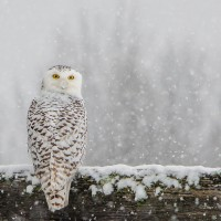 Bird Photography: 4 Basics that Will Get You Great Shots