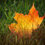 autumn 19 11