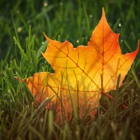 Autumn Through a Macro Lens: 19 Inspirational Images