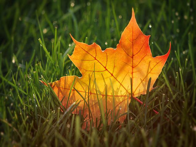 Autumn Through a Macro Lens: 19 Inspirational Images