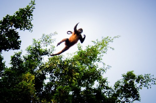 Spider Monkey 2