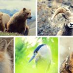 wildlife 7 2