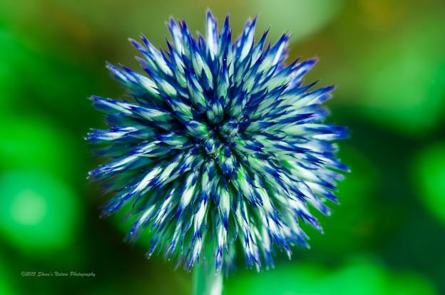 20120715-Leelanau Flowers-DSC_0419