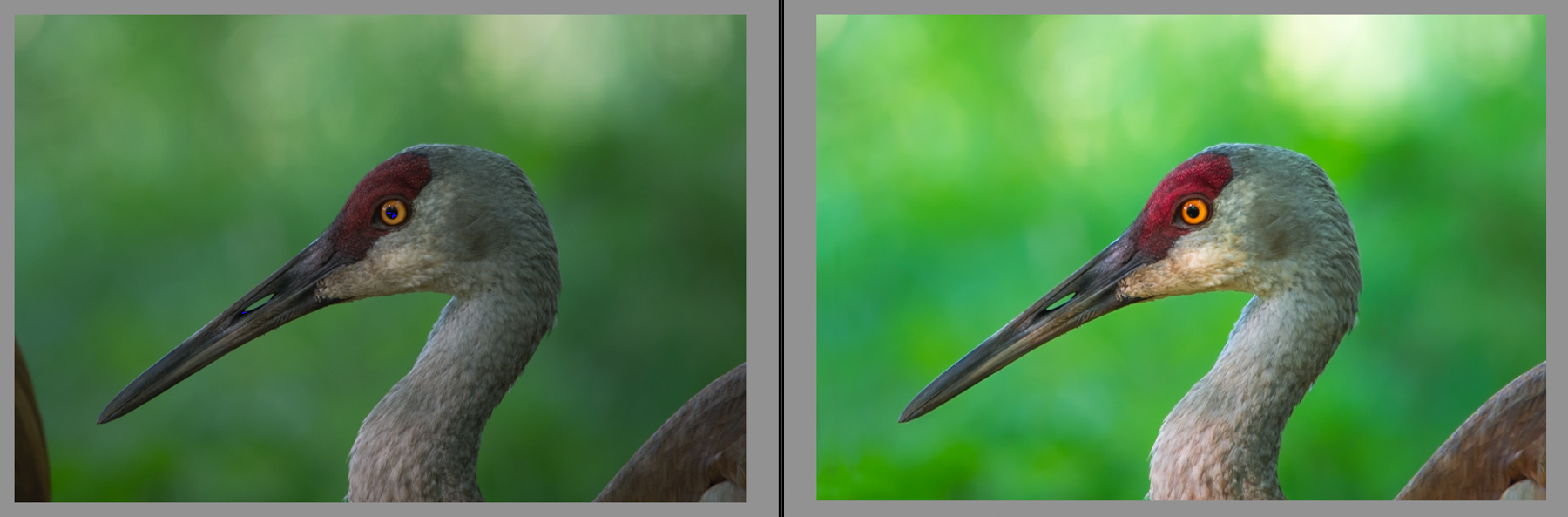 20150802-7100swnaturephotoaug1-before and after