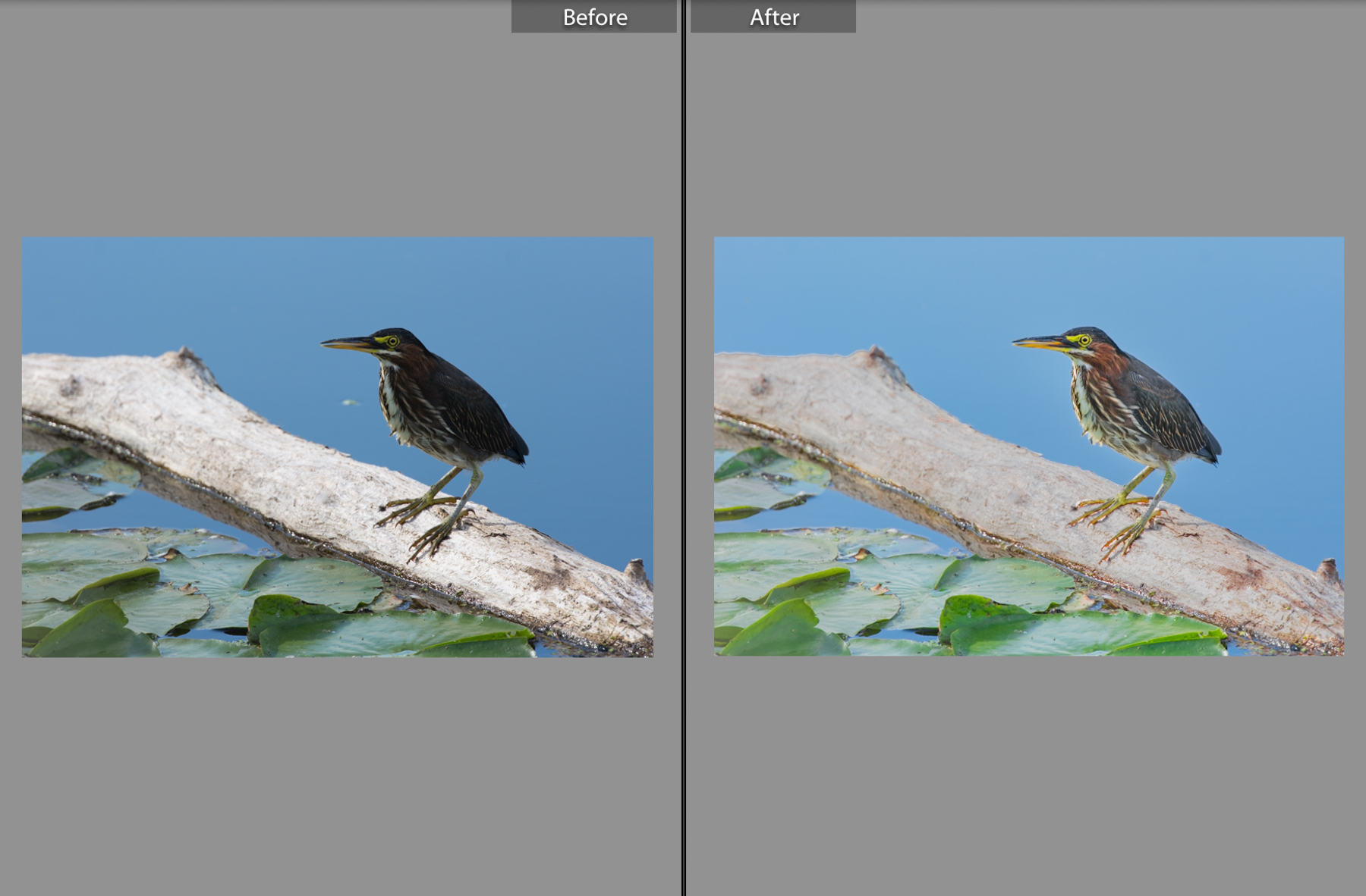 20150829-71swnaturephotoaug21-before and after