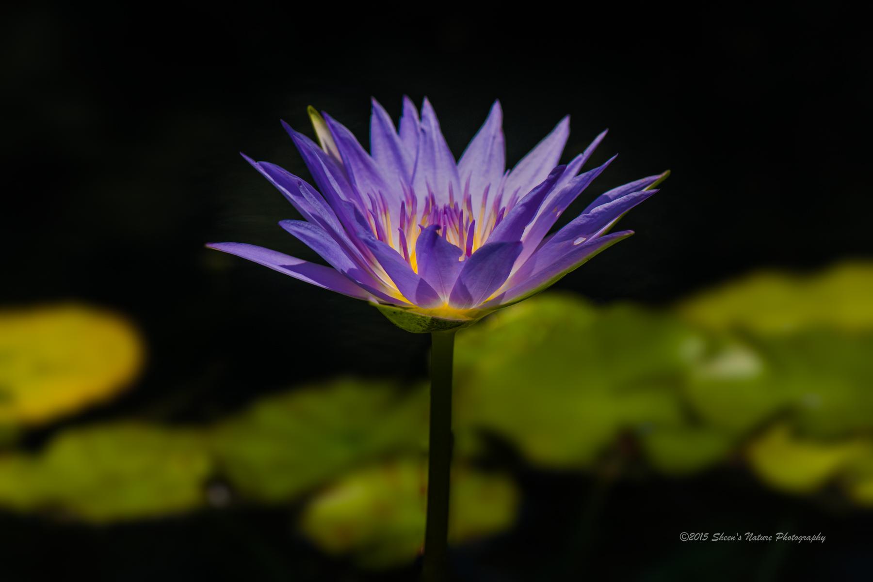 Irisblurcs6