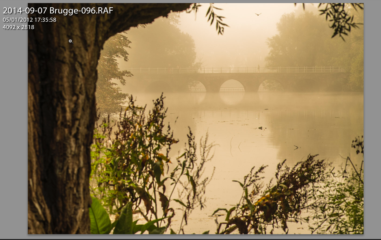 RAW files give you the maximum dynamic range from your camera's sensor