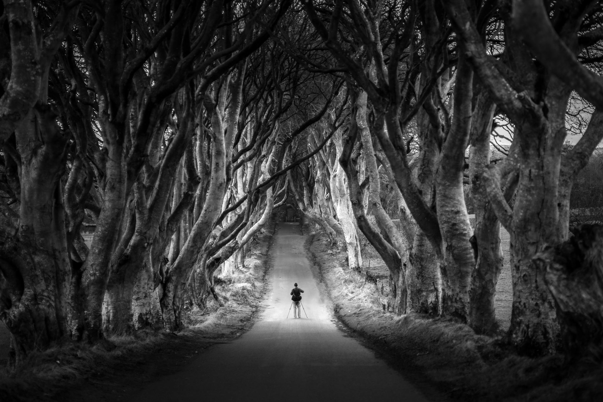 The photographer at the Dark Hedges, Northern Ireland by Giuseppe Milo