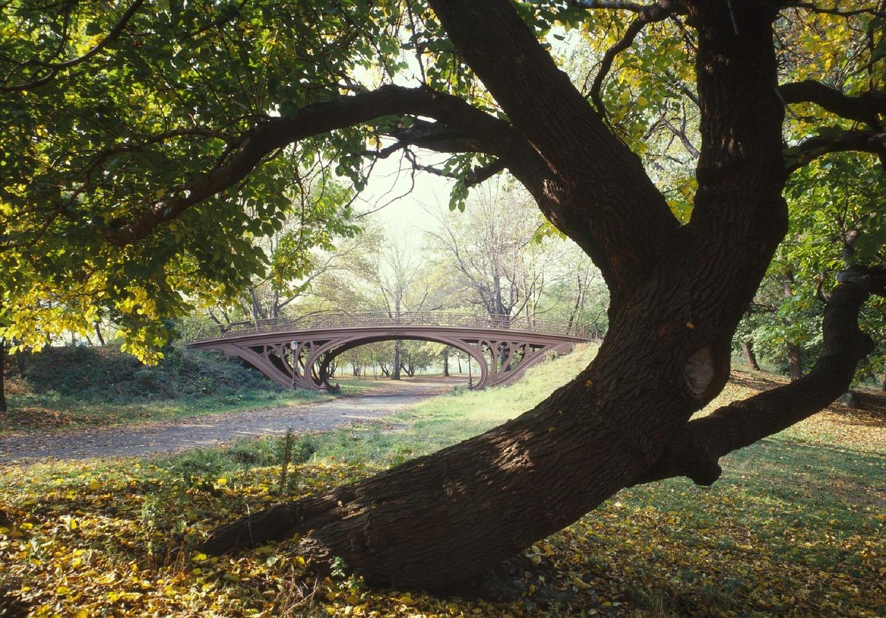 framed landscape composition