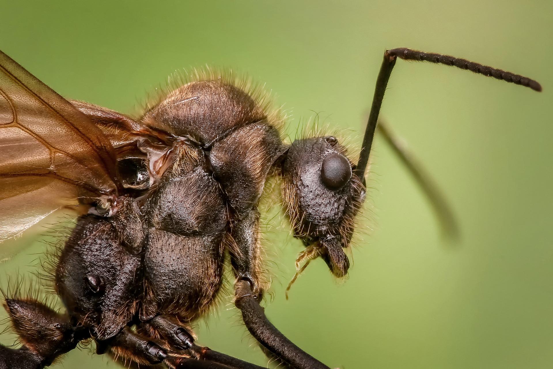 ant-1127650_1920