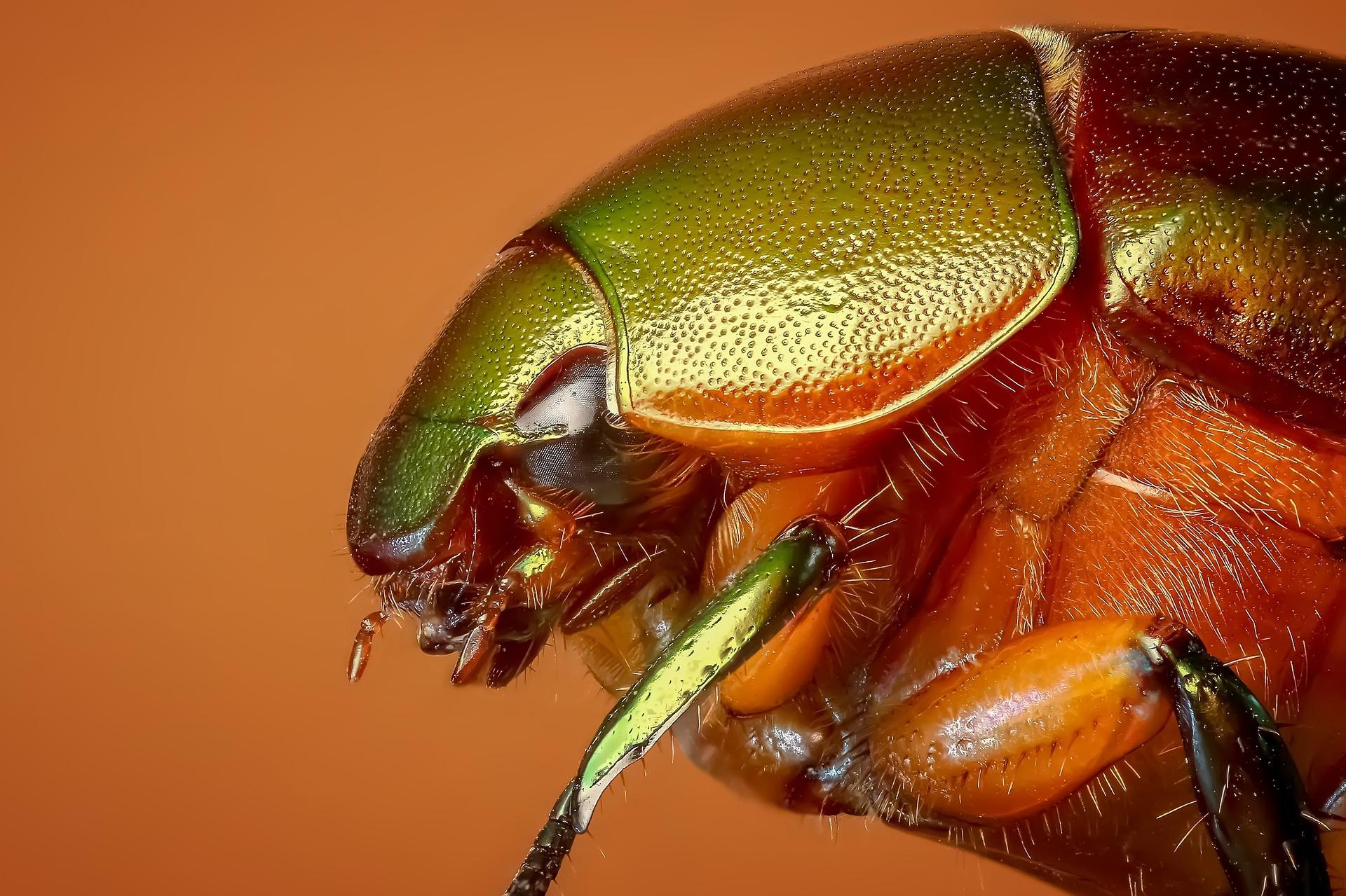 beetle-1142373_1920