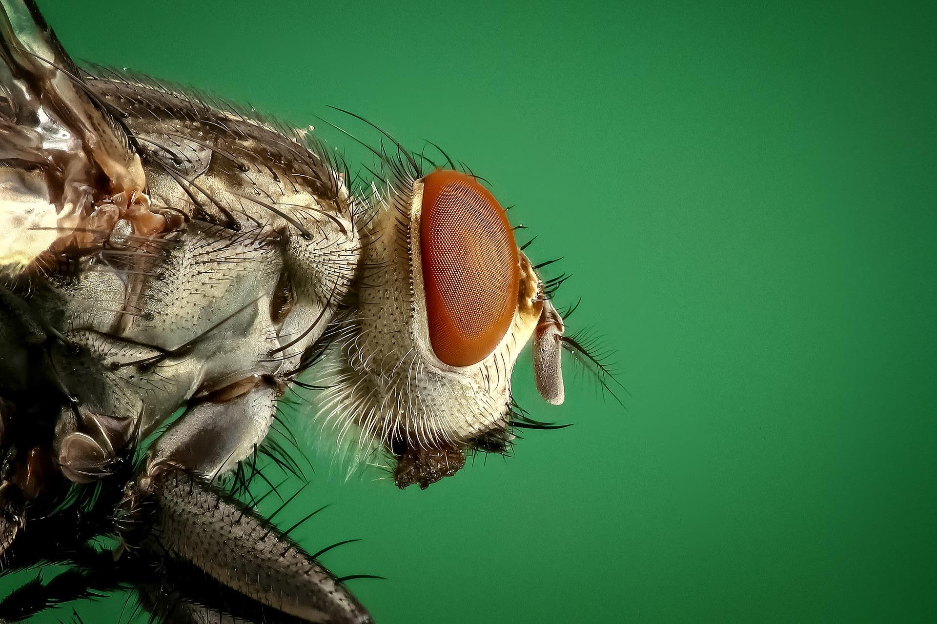 housefly-1127619_1920