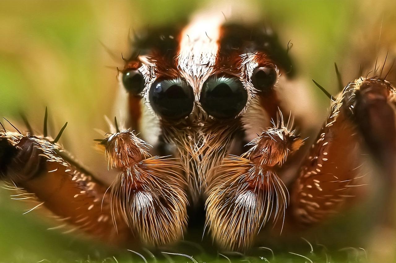 jumping-spider-1165752_1280