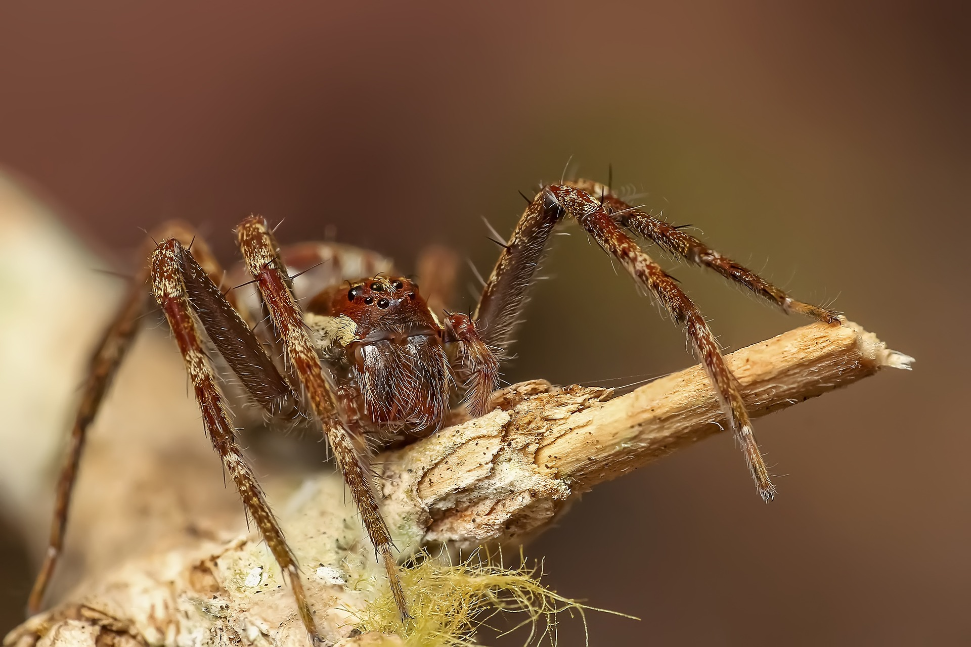 spider-1131640_1920