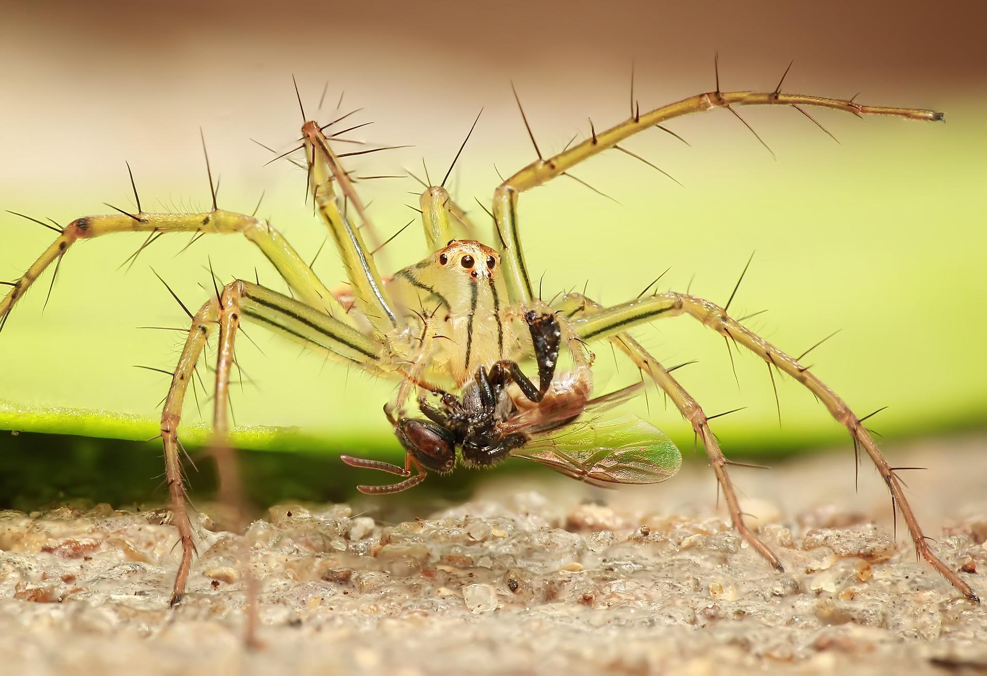 spider-1145105_1920