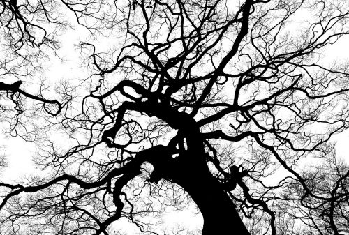 tree-894903_1280