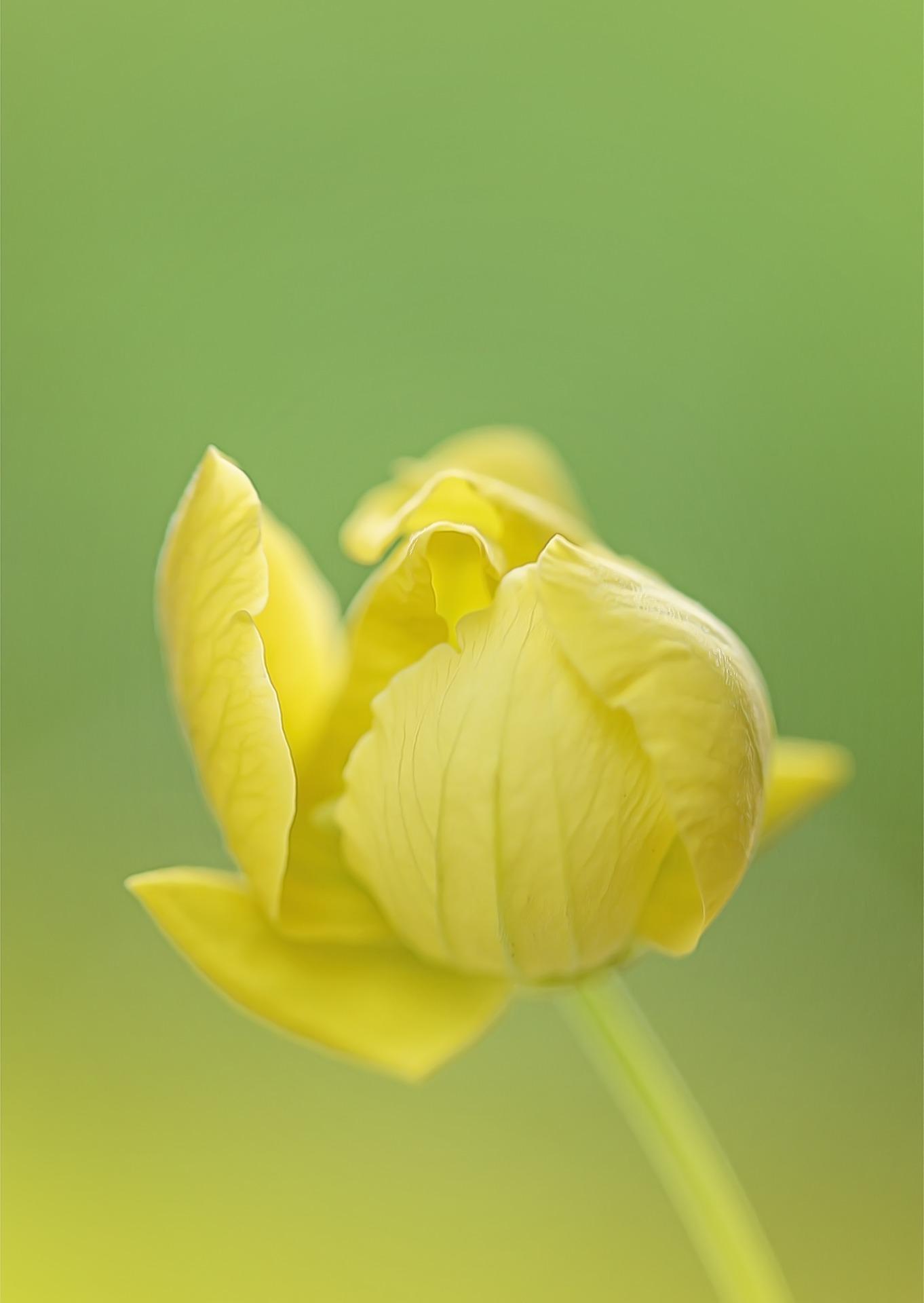 yellow-flower-1177155_1920