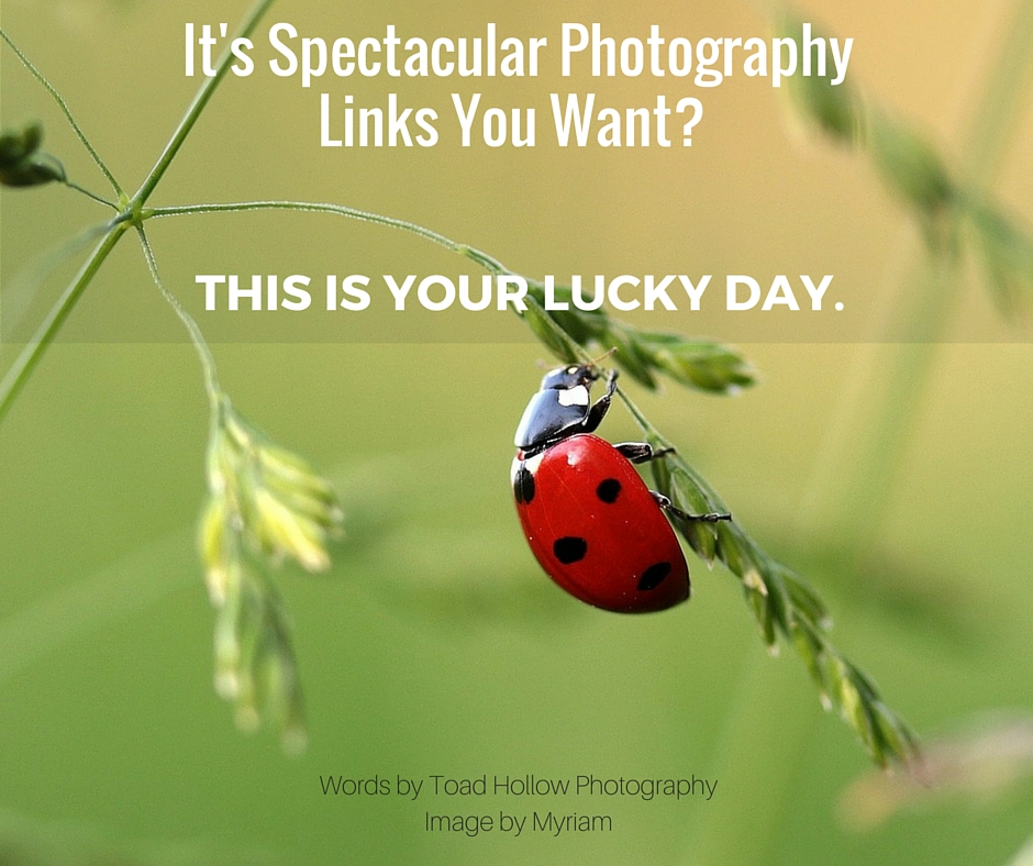 It's Spectacular Photography Links You Want- This Is Your Lucky Day.
